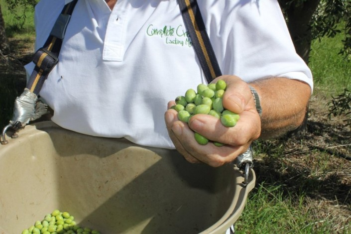 Grow-Olive