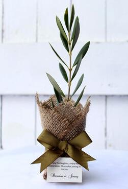 olive tree bomboniere