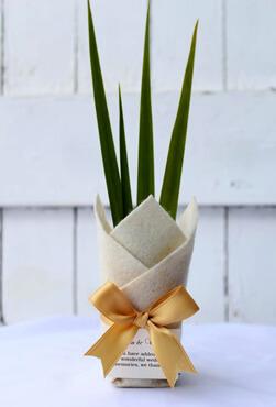 spanish iris bomboniere